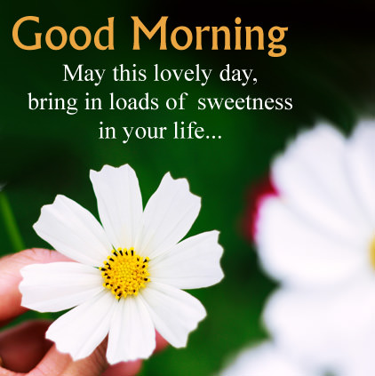 Good morning wishes for lovers