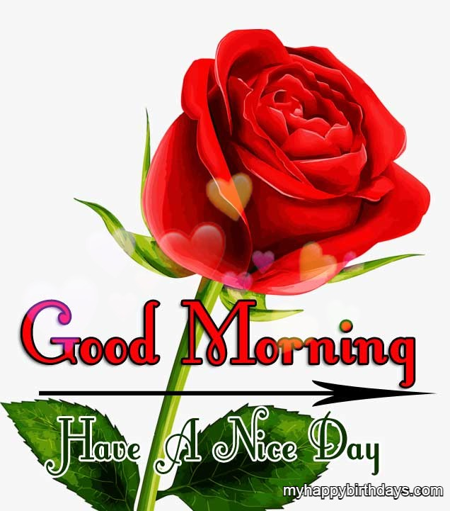 Good Morning Message Red Rose