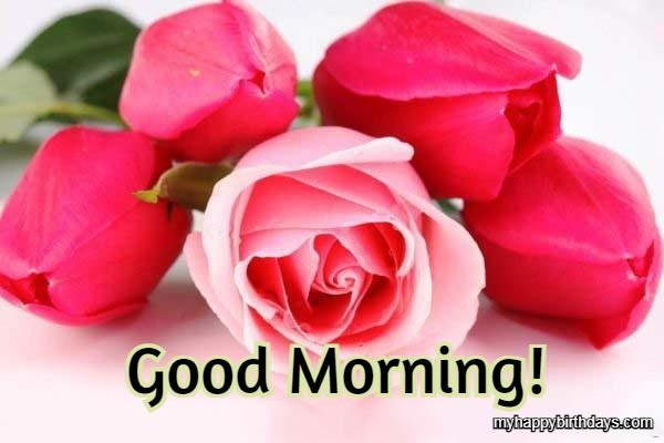 good morning roses flower image