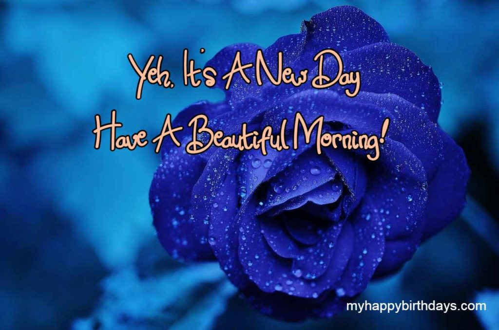 good morning image with blue rose