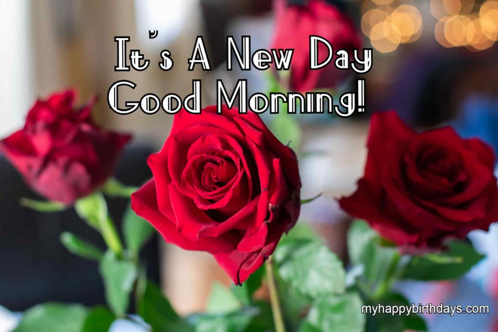 good morning wishes with four roses