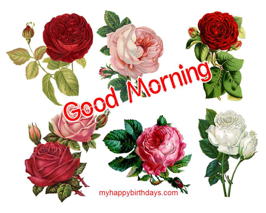 Images of roses with good morning quote