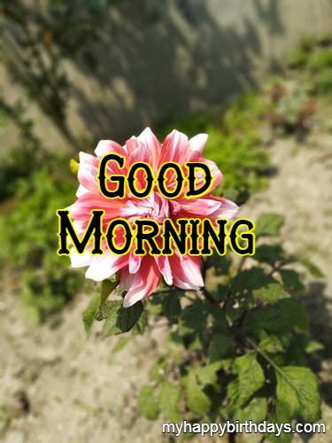 Pink Flower Good Morning