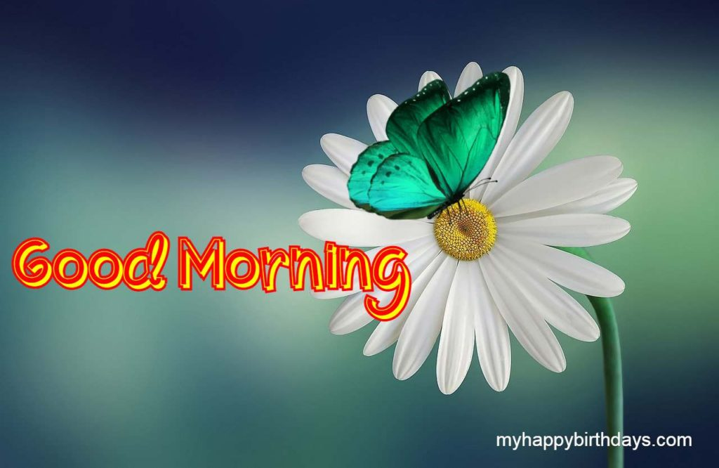 White Flower With Good Morning Wishes