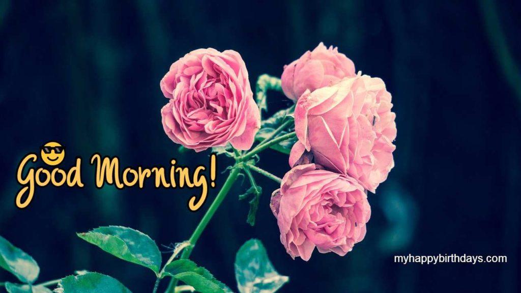 good morning pink roses pic