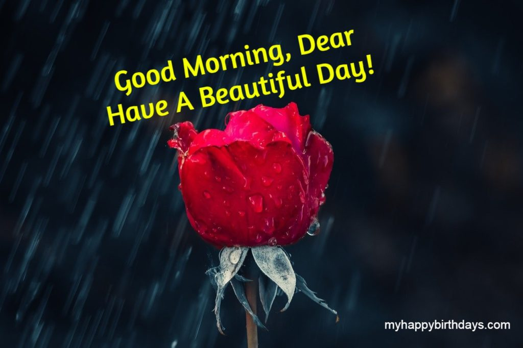 good morning wishes with rose image