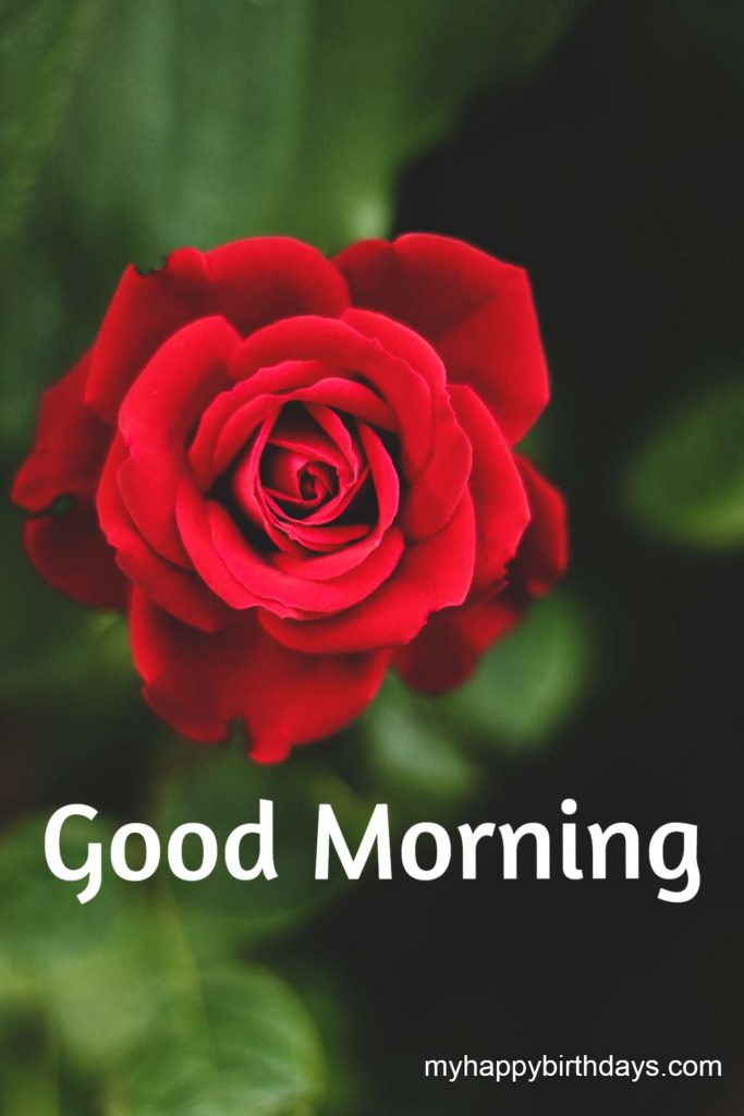 red flower image with good morning wishes