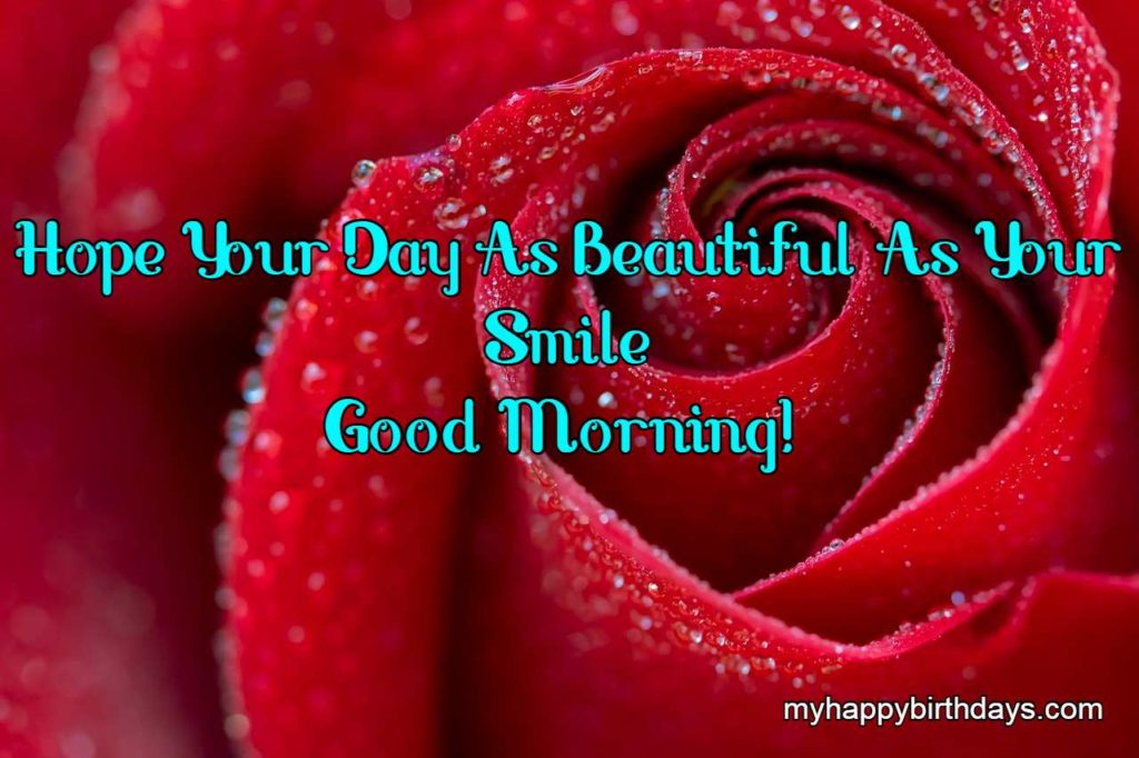 red rose picture with morning picture