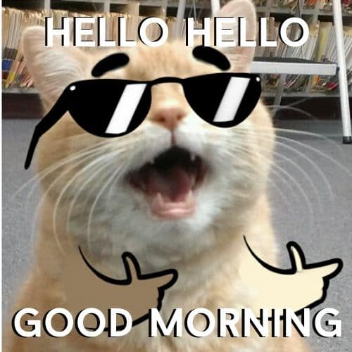 Cute Good Morning Funny Memes with Cat