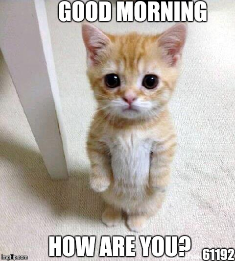 How are You Good Morning Meme