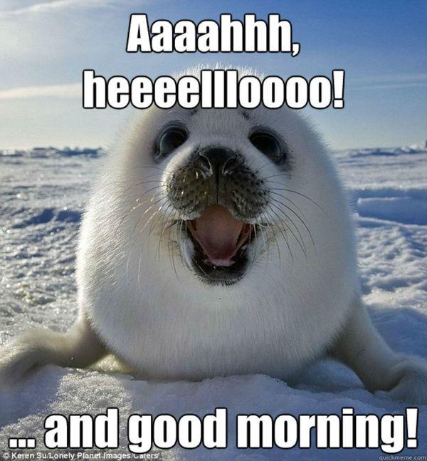 Good Morning Cute Meme