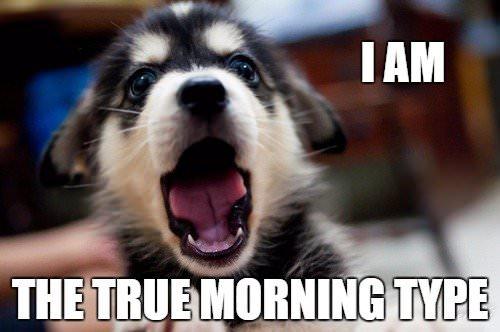 Morning Meme for Friends