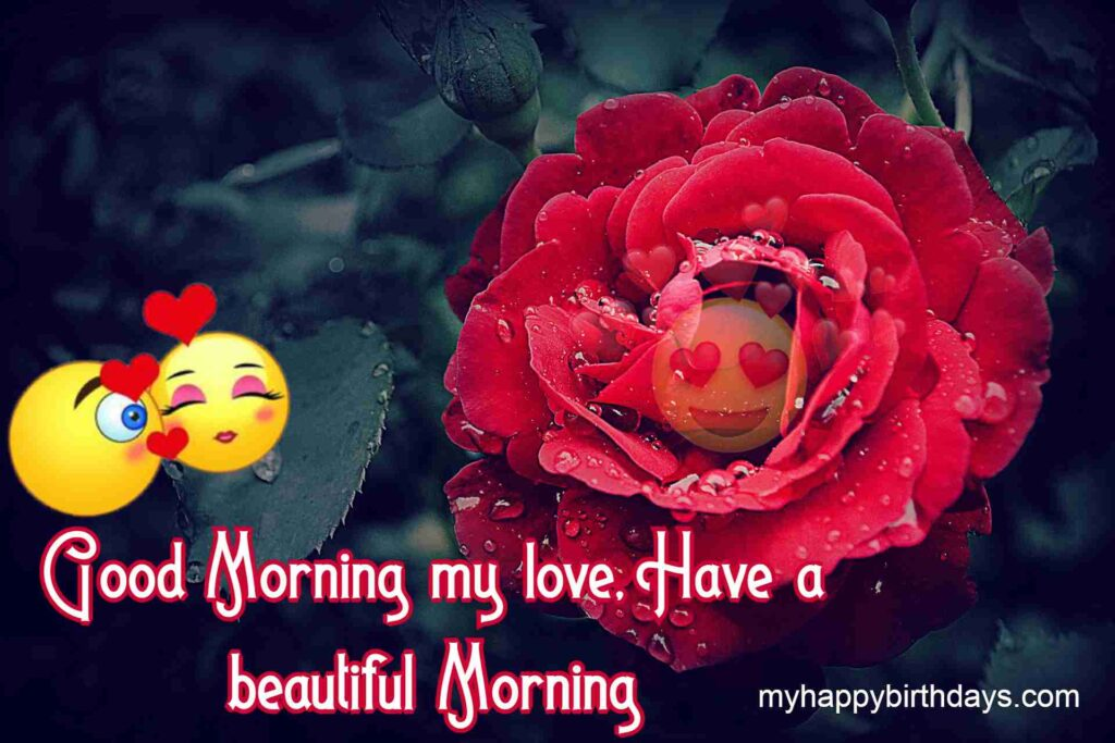 Good Morning To My Love Rose