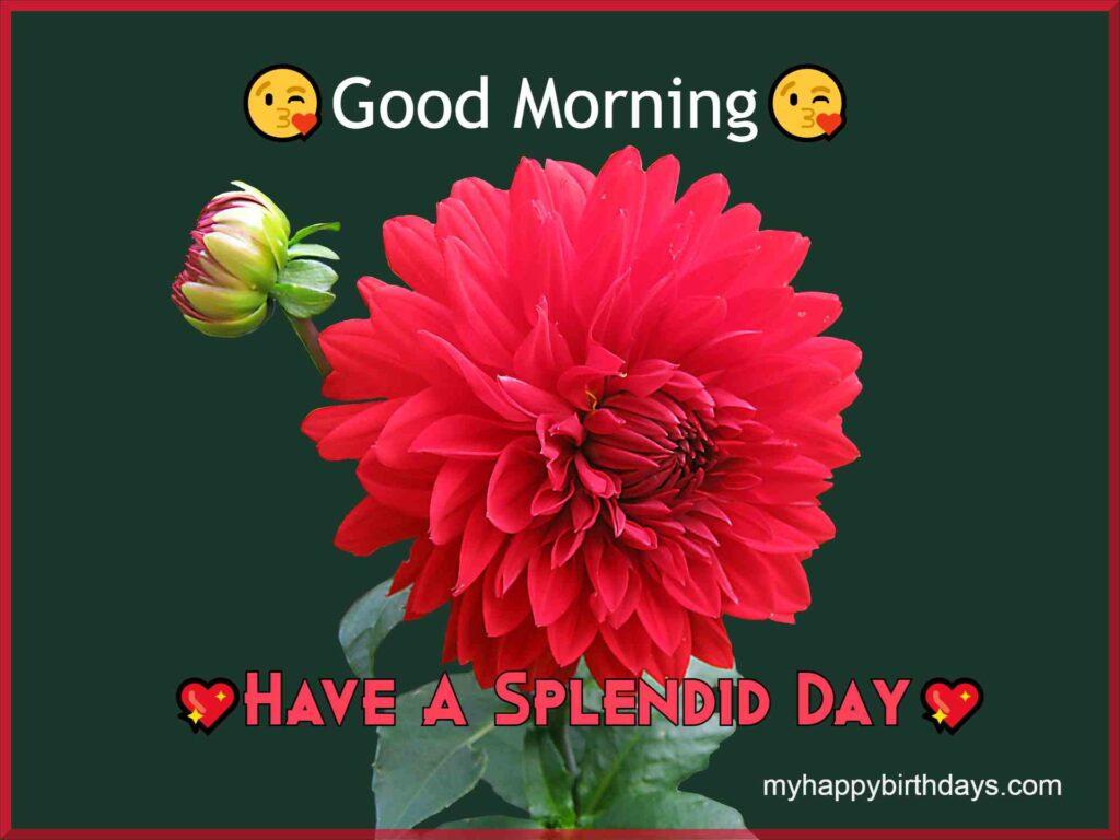 Good Morning With Elegant Red Rose