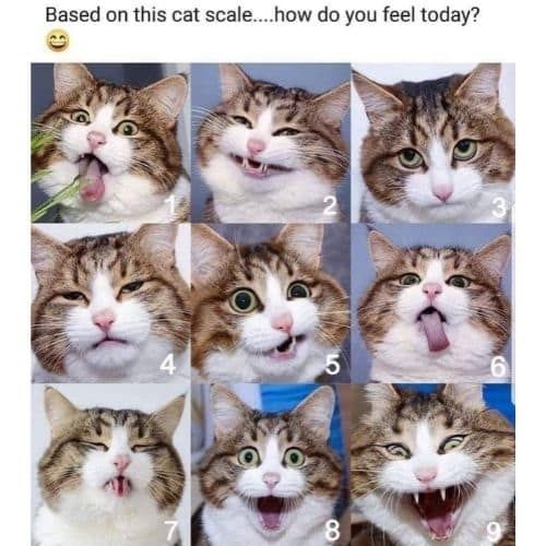 Funny Morning Memes