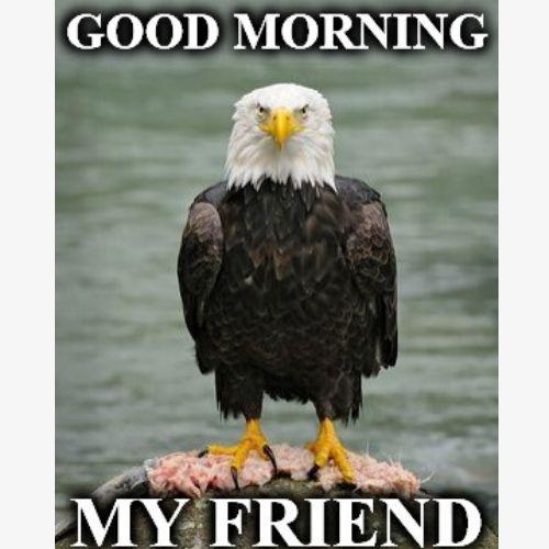 Morning Memes Friend