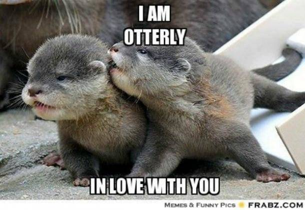 I am otterly in love with you meme