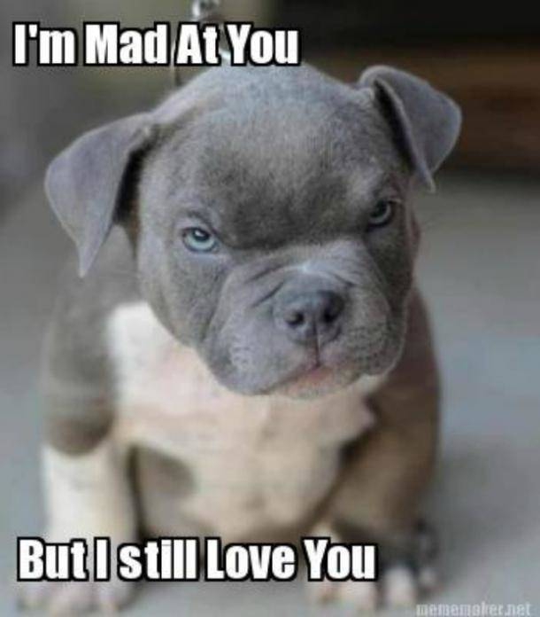 I'm mad at you but still, I love you meme