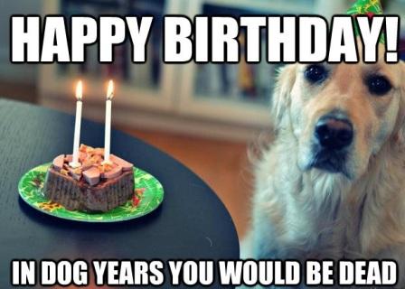 Happy Birthday Dog Meme 2