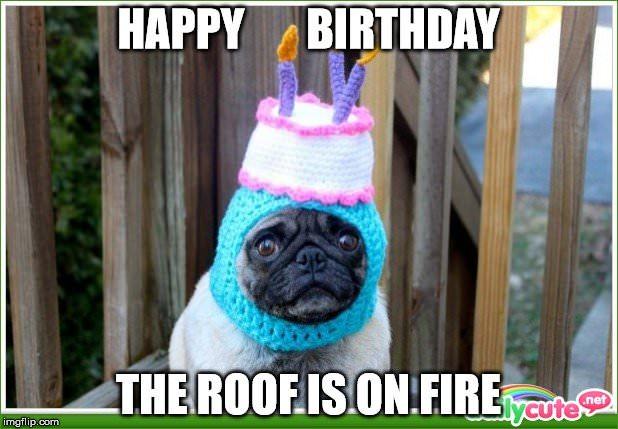 Happy Birthday Dog Meme 3