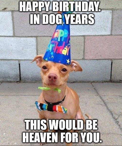 Happy Birthday Dog Meme 7
