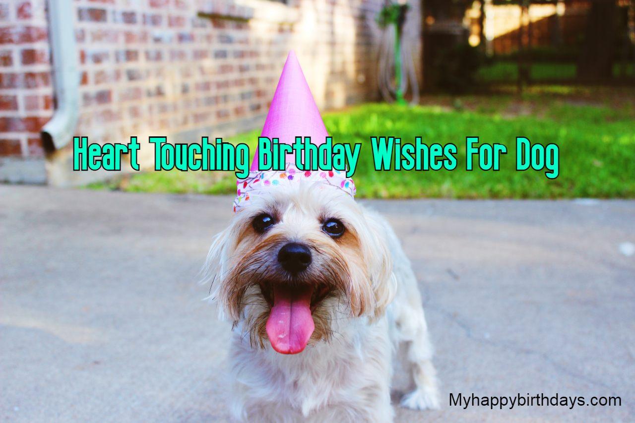 Heart Touching Happy Birthday Dog Wishes