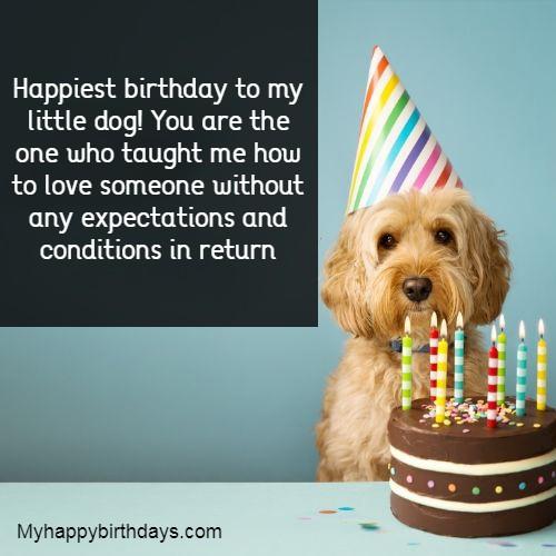 Birthday Wishes For Dog