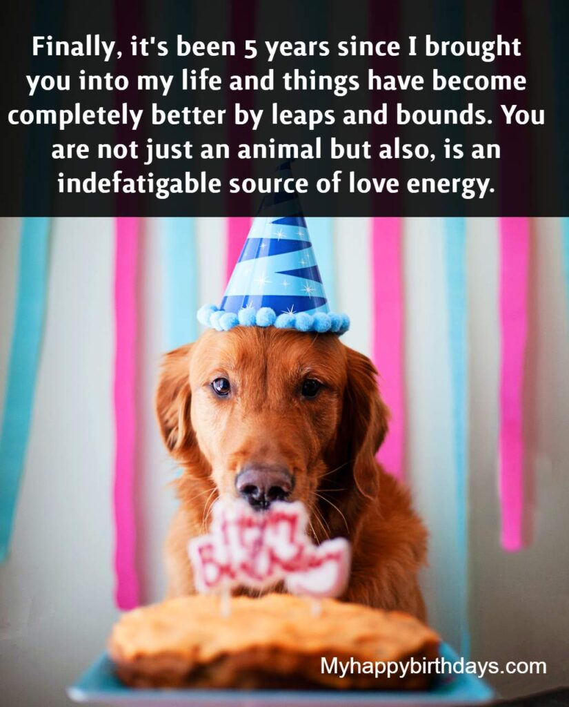 Cute Happy Birthday Wishes For Dog