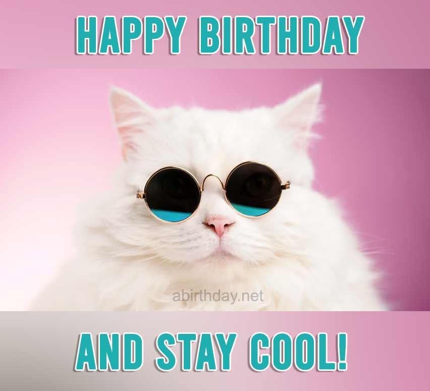 Happy Birthday Cat Memes 2