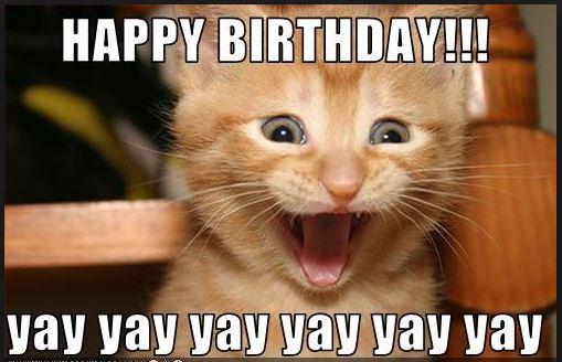 Happy Birthday Cat Memes 4